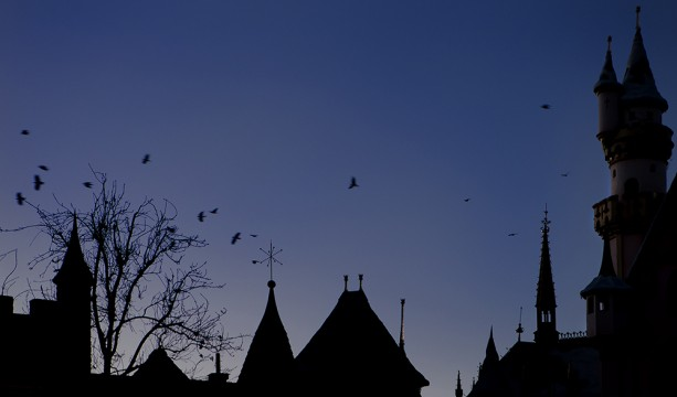 Disney Park After Dark: A Photo to Crow About from Disneyland Park