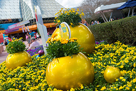 How to Grow Amazing Container Gardens Seen at Walt Disney World Resort