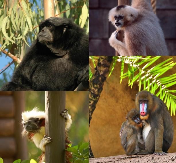 Wildlife Wednesday: Celebrate Primate Day, Baby Gorillas at Disney's Animal Kingdom!