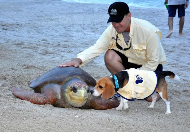 Wildlife Wednesday: Meet Captain Ron—a Sea-Turtle-Egg-Detection Dog!