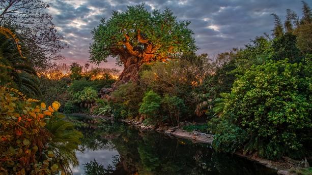Sunrise at the Tree of Life at Disney's AnimalKingdom
