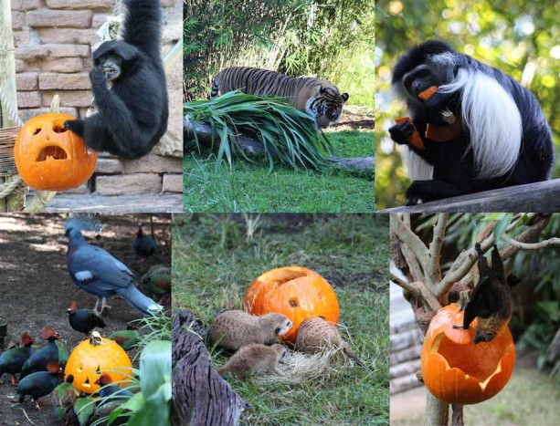 Wildlife Wednesday: Animals Love Pumpkins!