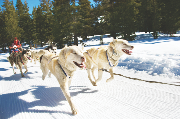 Spend this Winter in Wyoming with Adventures by Disney