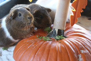 Wildlife Wednesday: Pumpkins Add Spice to Animal Enrichment Fun