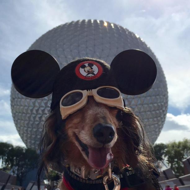 Guests Show #ShareYourEars Spirit at Disney Parks