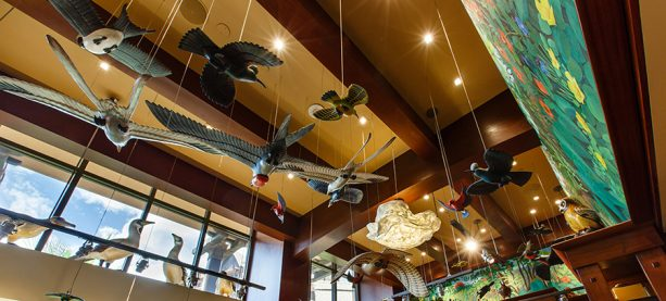 The Language of Aloha at Aulani, a Disney Resort & Spa: ʻElepaio
