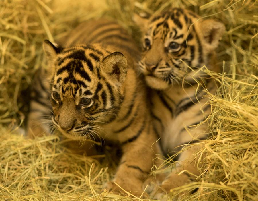 Wildlife Wednesday: Happy 1st Birthday, Anala & Jeda!