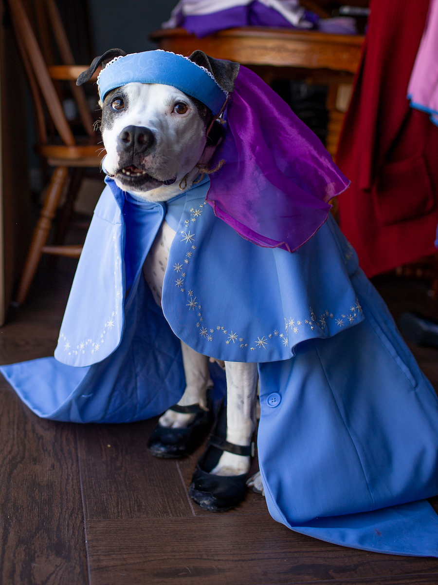 Disney Springs Cast Members' Pets Are Dressed To Impress in Costumes Perfect for Halloween andBeyond