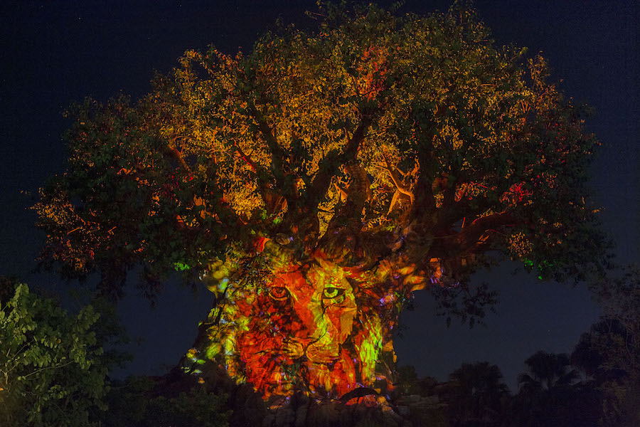 Celebrating 'The Lion King' at Disney's Animal Kingdom