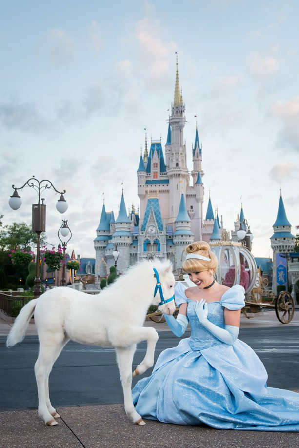First Look: Disney's Newest 'Cinderella Pony' at Walt Disney World Resort