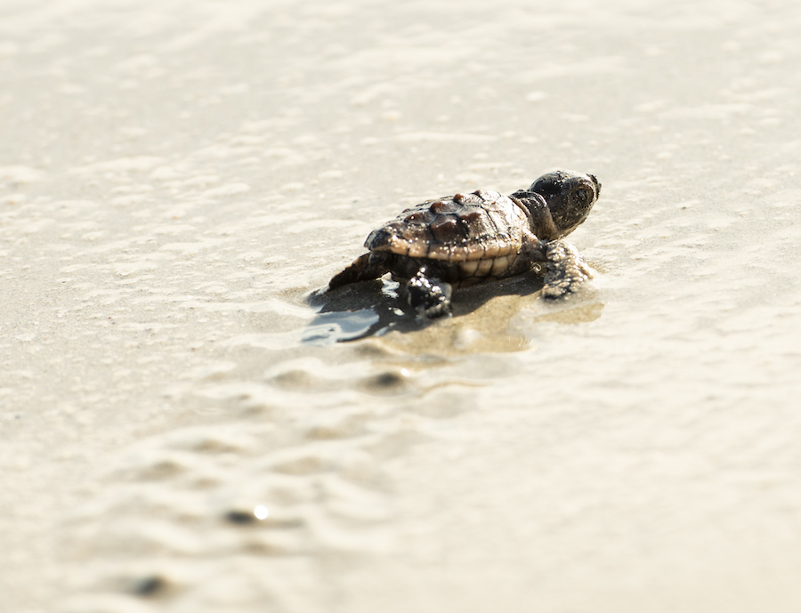 12th Annual Tour de Turtles is Off to a Swimming Start