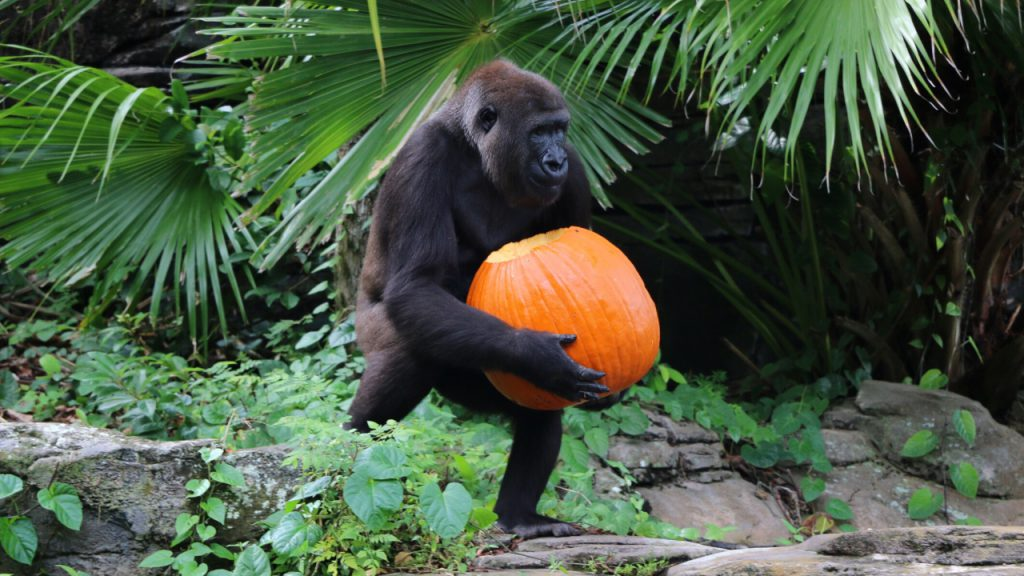 Wildlife Wednesday: Playing with Pumpkins