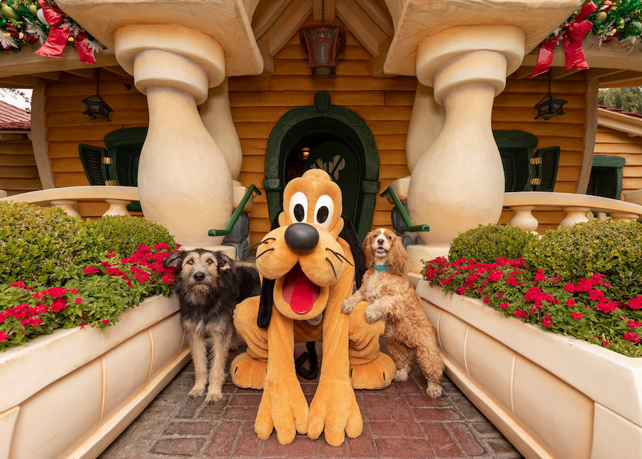 'Lady and the Tramp' Stars Celebrate Disney+ Film With A Tail-Wagging Good Time at Disneyland Park