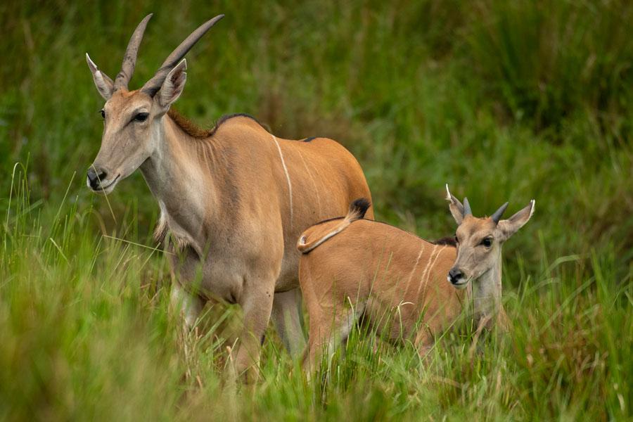 Wildlife Wednesday: Doppler Debuts: Finally on the Radar at Kilimanjaro Safaris Savanna