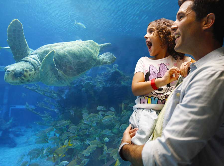 Get Ready for a Fin-tastic Scavenger Hunt Adventure Coming to The Seas with Nemo & Friends at EPCOT!